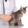 Ветеринарные клиники в Казинке
